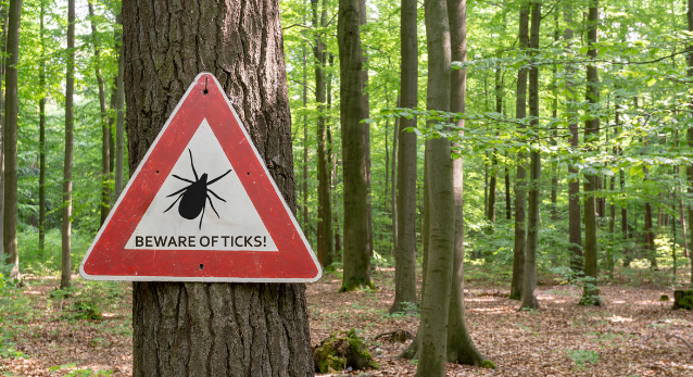 How a Tick Changed Me: My Life With Alpha-Gal Syndrome